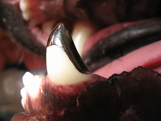 Crowns (Caps) in Dogs Tooth