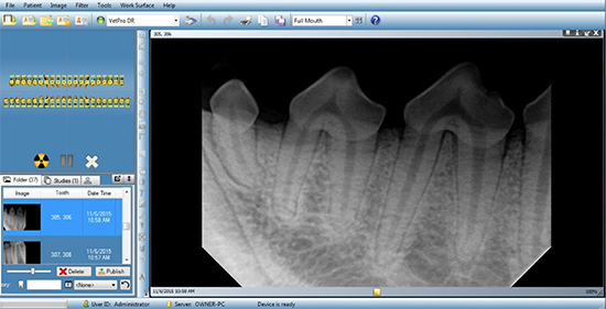 Dental X-Rays for Pets - Pet Dental Radiography Orlando