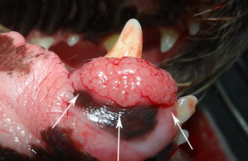 endodontics2